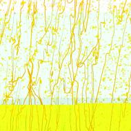 Canary and Sunflower Yellow Frit, Sunflower Yellow Streamers Clear Base Collage, Single-rolled, 3 mm, Fusible, 17x20 in., Half Sheet